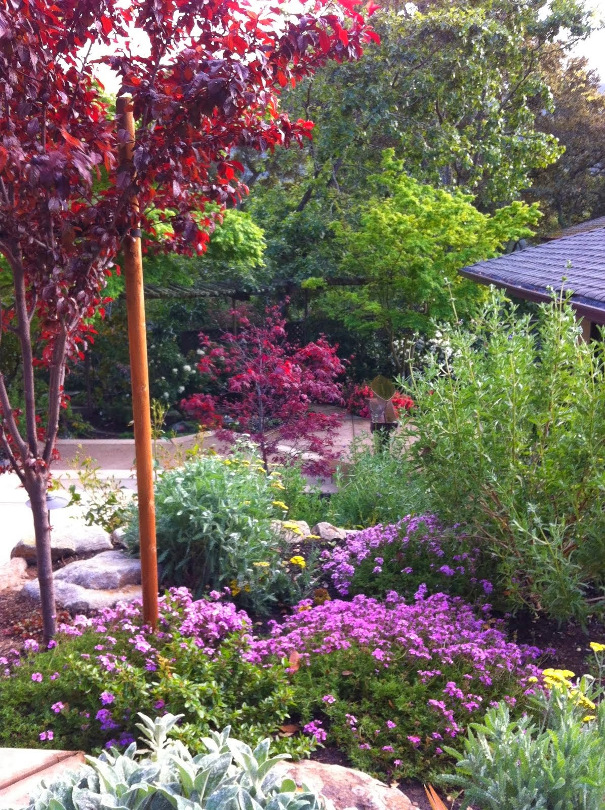 Orinda Garden in Bloom