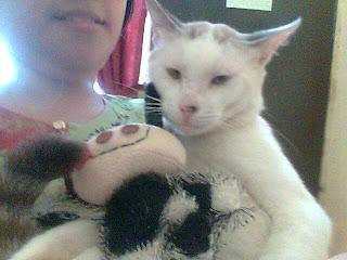 Akumama Blogspot Com Mama Suka Kucing