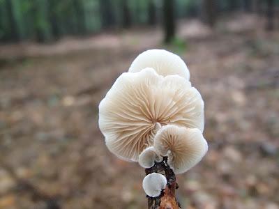 małe grzyby nadrzewne