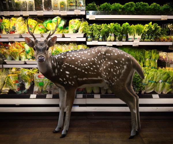 ciervo en zona de verduras en supermercado