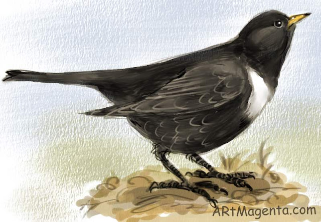 Ring Ouzel, bird sketch by Artmagenta.