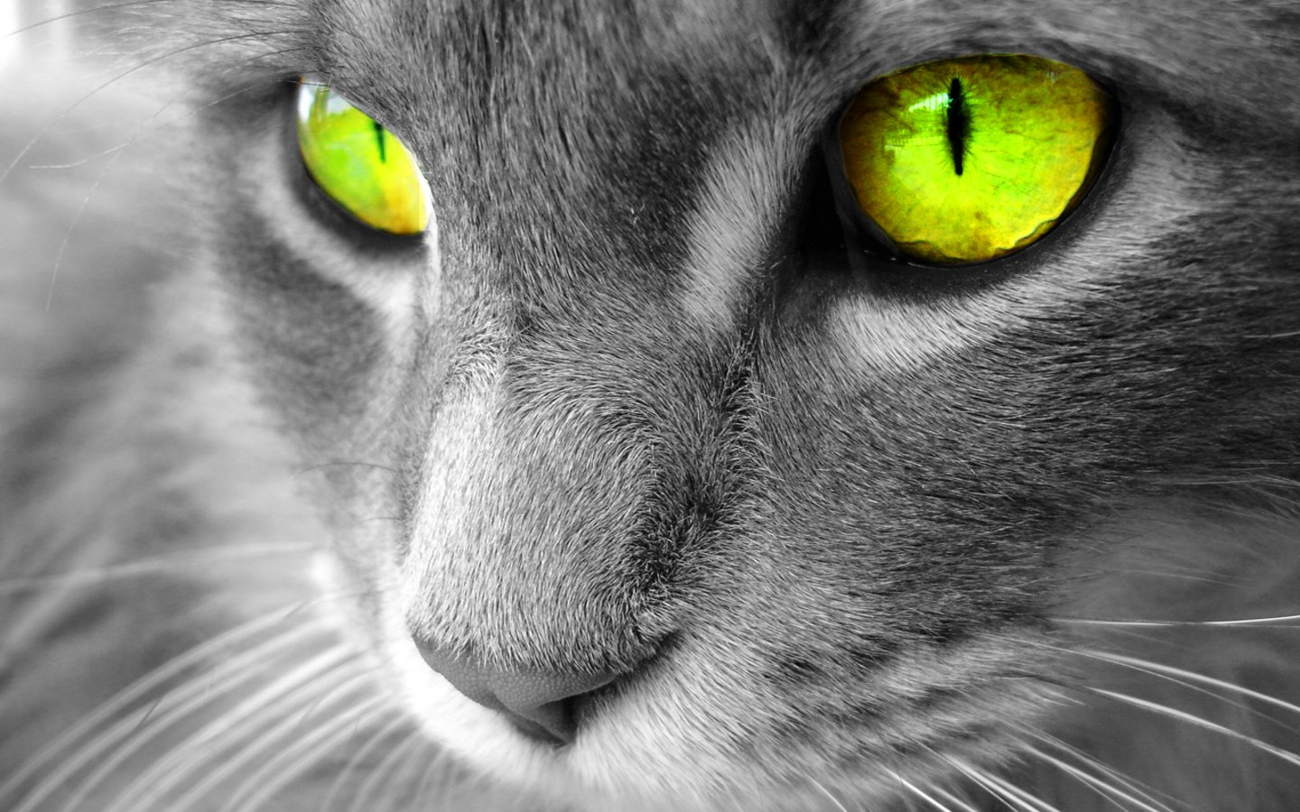 http://2.bp.blogspot.com/-PzVUpeDU5k4/T6lLK1Or9-I/AAAAAAAAAMc/enZMDwmf7bI/s1600/The-best-top-desktop-cat-wallpapers-3.jpg