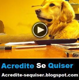 Esse Cachorro Adora Ouvir o Seu Dono Tocar Guitarra, Mas Quando Ele Para Adivinhem O Que Acontece