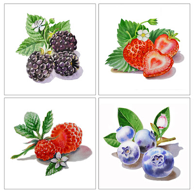 berry watercolor paintings