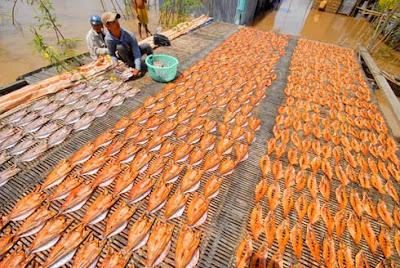 Cá lóc đánh bắt được không ăn hết phải xẻ ra phơi khô để bán hoặc để dành ăn dần