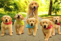 leash - pet safe