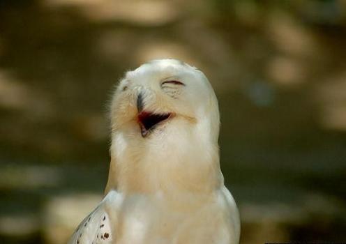 Funny Smile