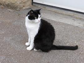 Editorial Cat