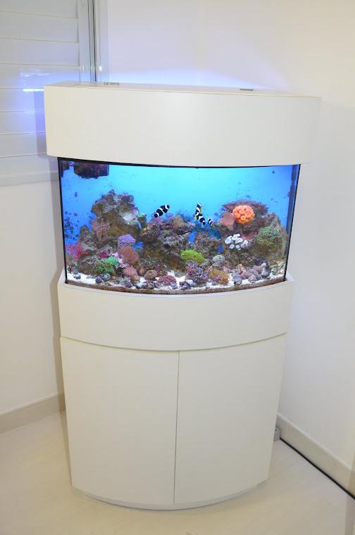 Primeiro aquário