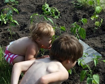 Smelling Newly Planted Peppers