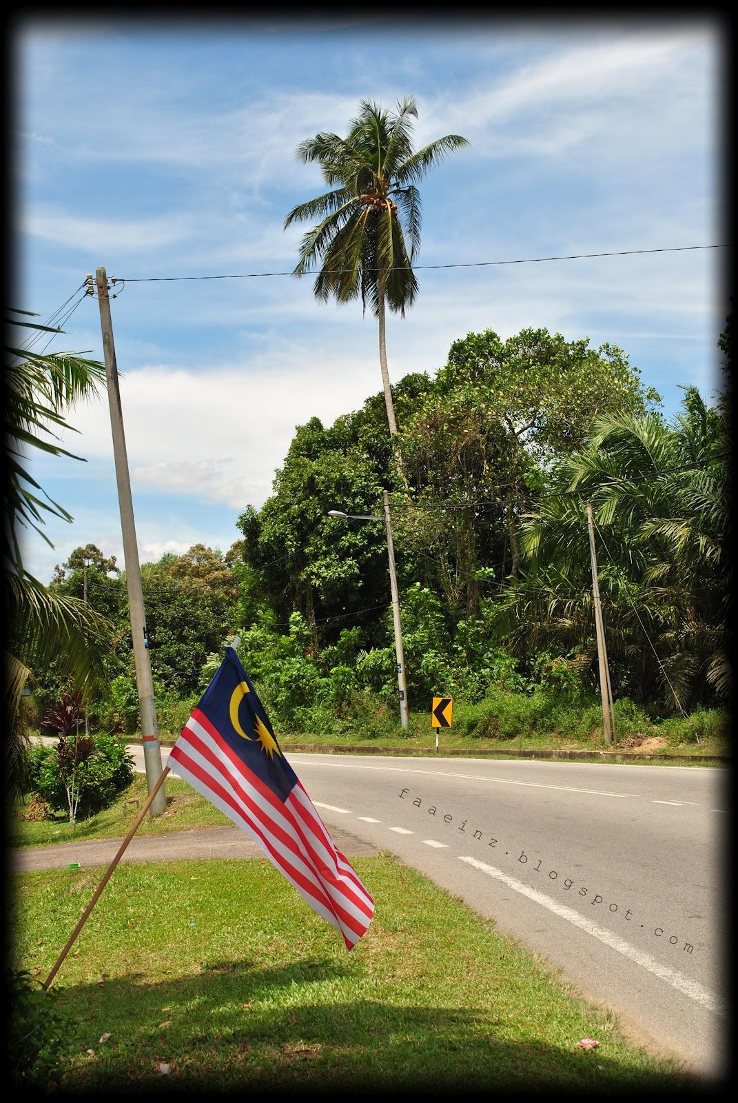 Pokok Kelapa : 166 #BicaraLensa