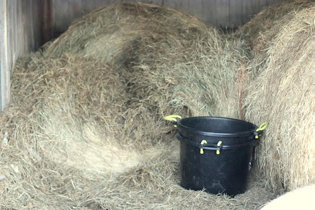 Hay mow, mowhay, or hay hay?