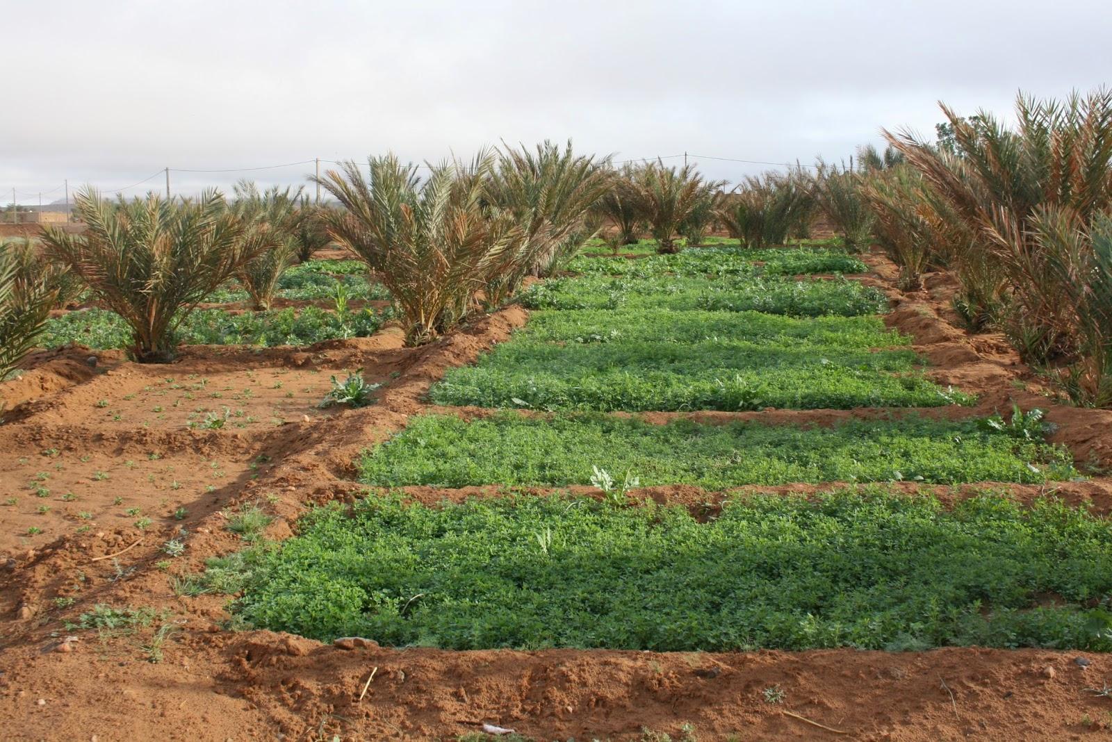 cocina ecologica, erfoud, fin de año, desierto de marruecos, viajar en navidad
