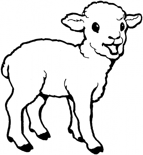 Coloring Pages of a Baby Lamb Sheep Free Download