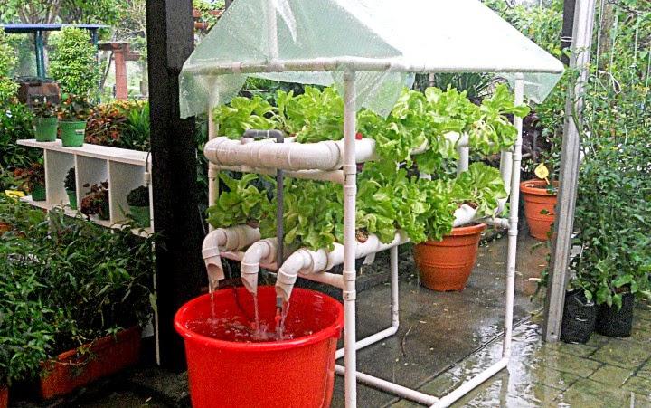 Tapak Pameran Sayuran Dan Herba MAHA 2014