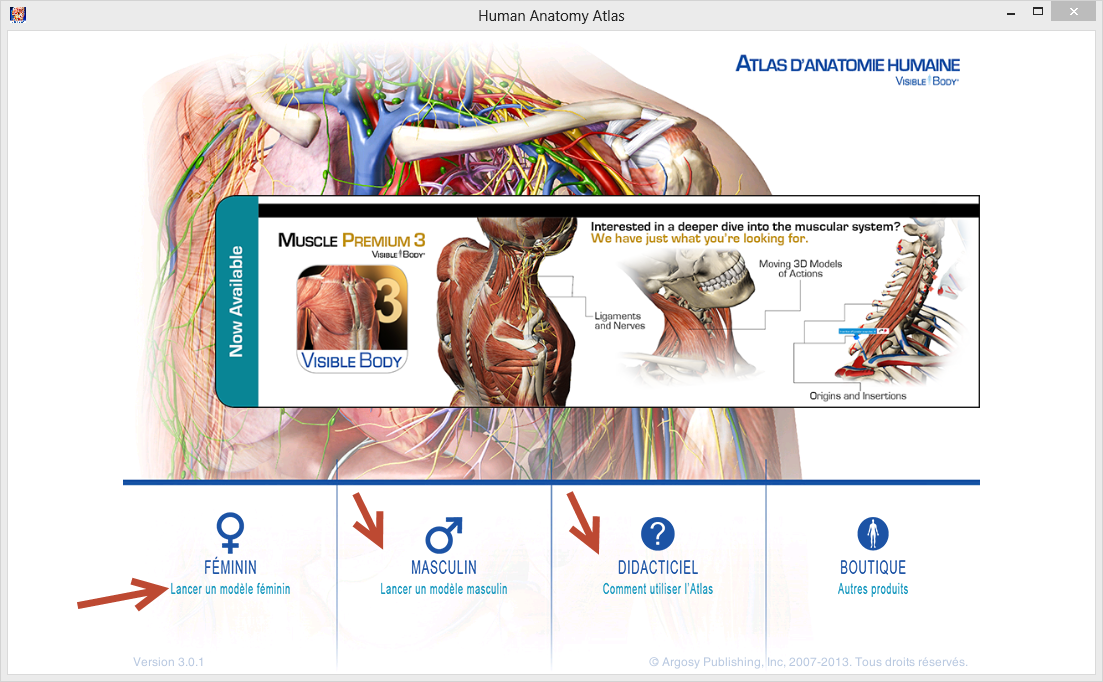 Visible body 3d human anatomy