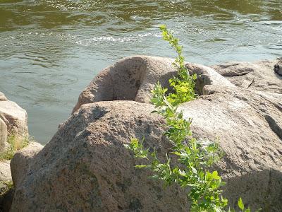на верхушке скалы видны глубокие колодцы, вырезанные в граните