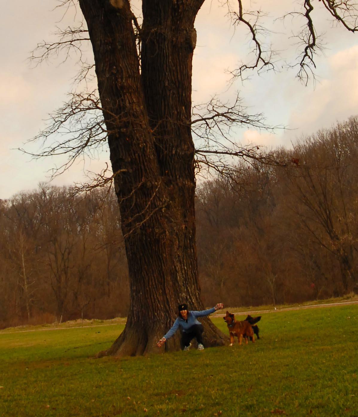 my+tree.jpg