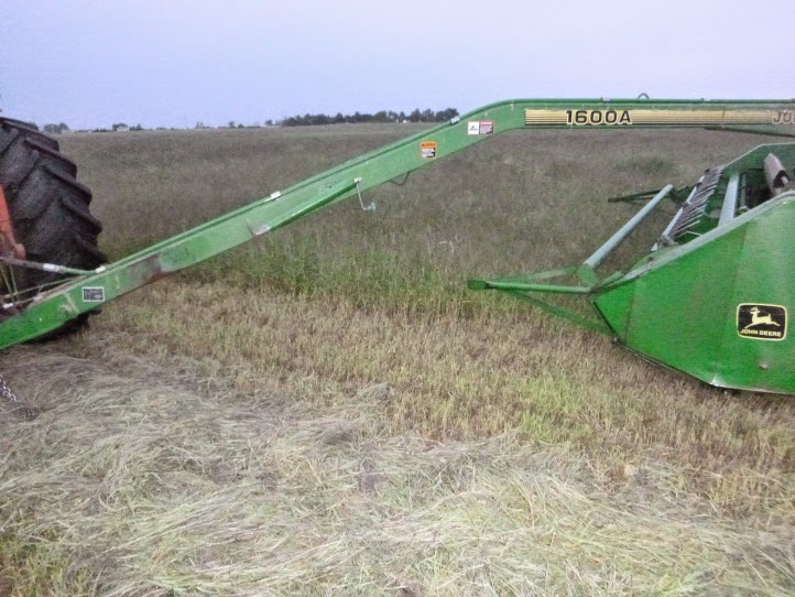 Mowing a field of forage (crabgrass) for cattle