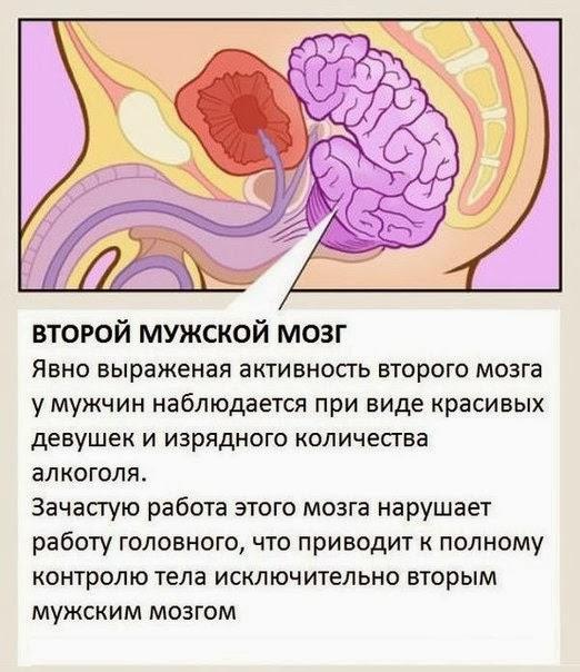 Дополнительные органы у человека