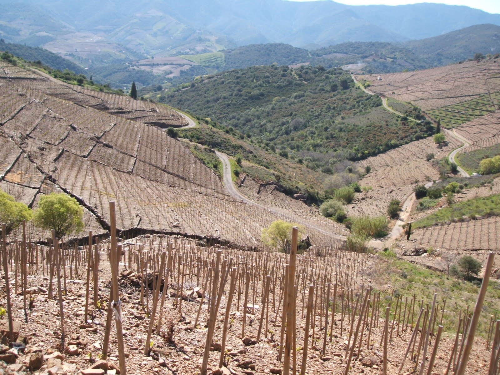 Vineyards: Banyuls-sur-Mer, Roussillon