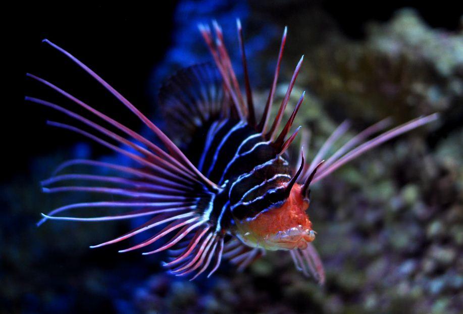 planet animals 2012: deep sea fish, Reel Combo