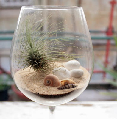 Glass+terrarium