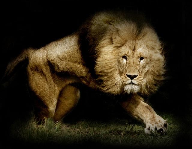 16 fotos espetaculares de animais no momento de ataque