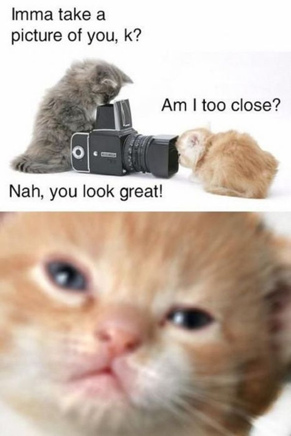 Funny Relationship Captions : 30 funny animal captions - part 2 (30 pics) ~ I Love Funny Animal ...