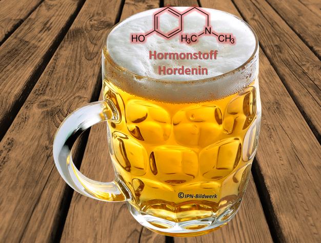 östrogen im bier