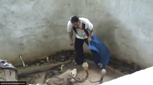 Video Puluhan Ular Tedung Kena Tampar Dengan Lelaki Ini