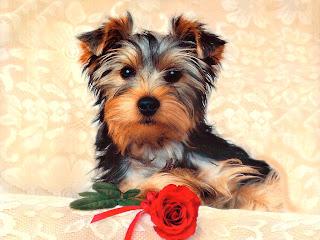 Wallpaper gambar anjing lucu