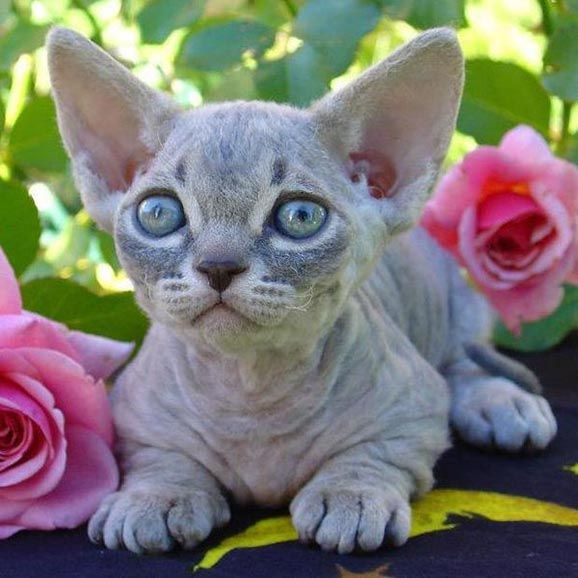 Top 10 Unusual Cat Breeds
