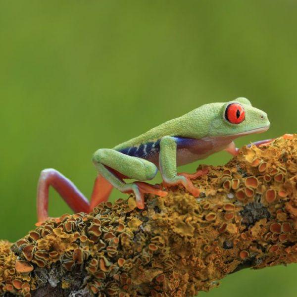 Amazing Frog: Frog With Amazing Colours