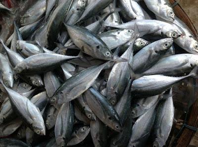 Mẹo phân biệt cá bị ướp hàn the và đạm urê