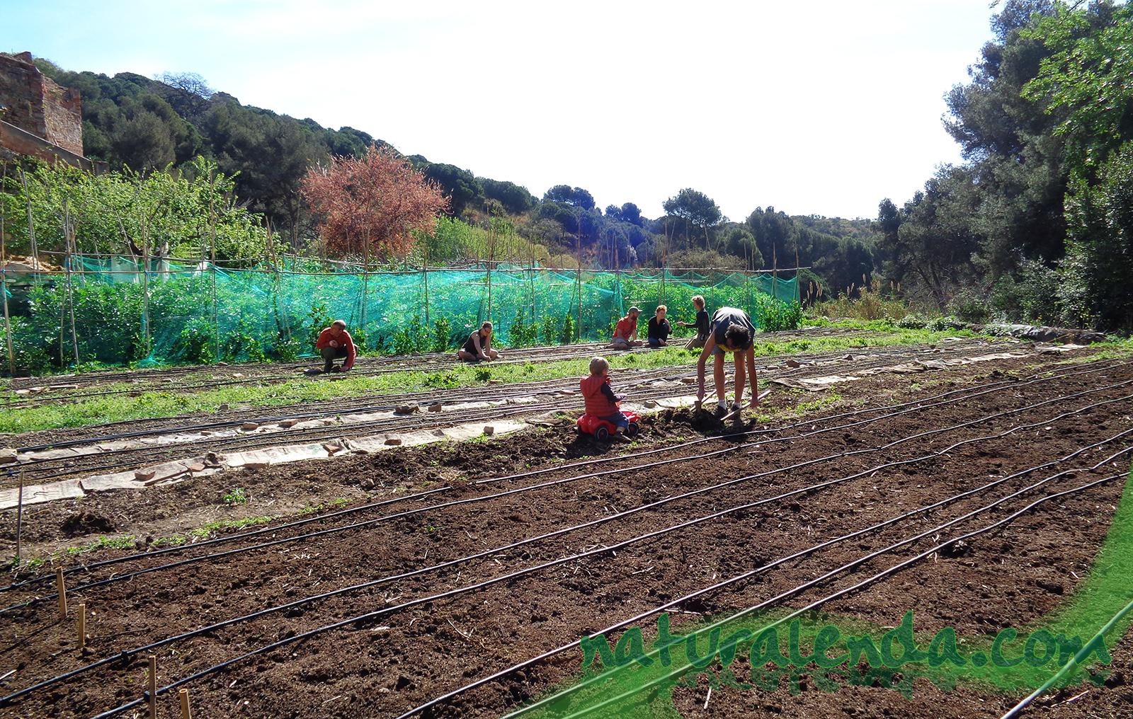 gente trabajando en el campo
