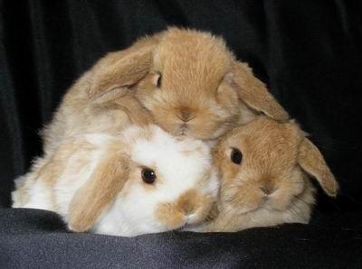 Three nice bunny.
