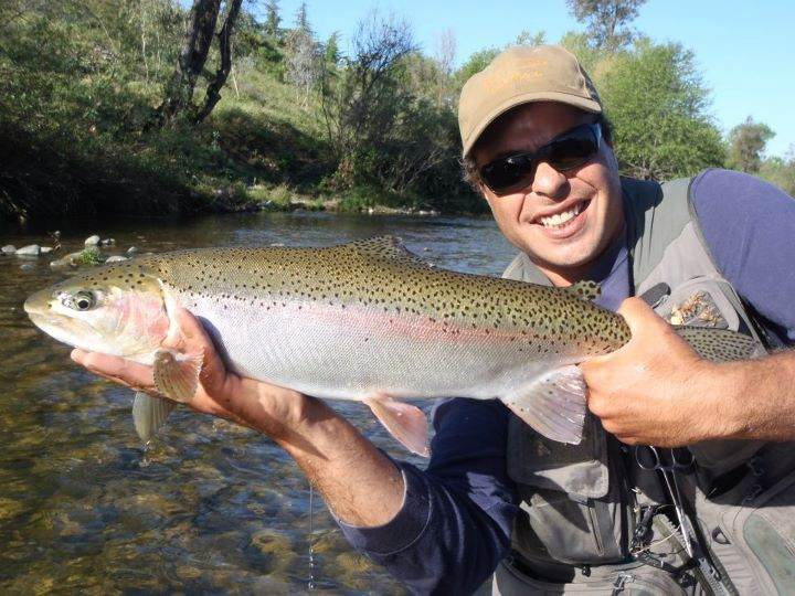 the california summer steelhead trout and salmon fly