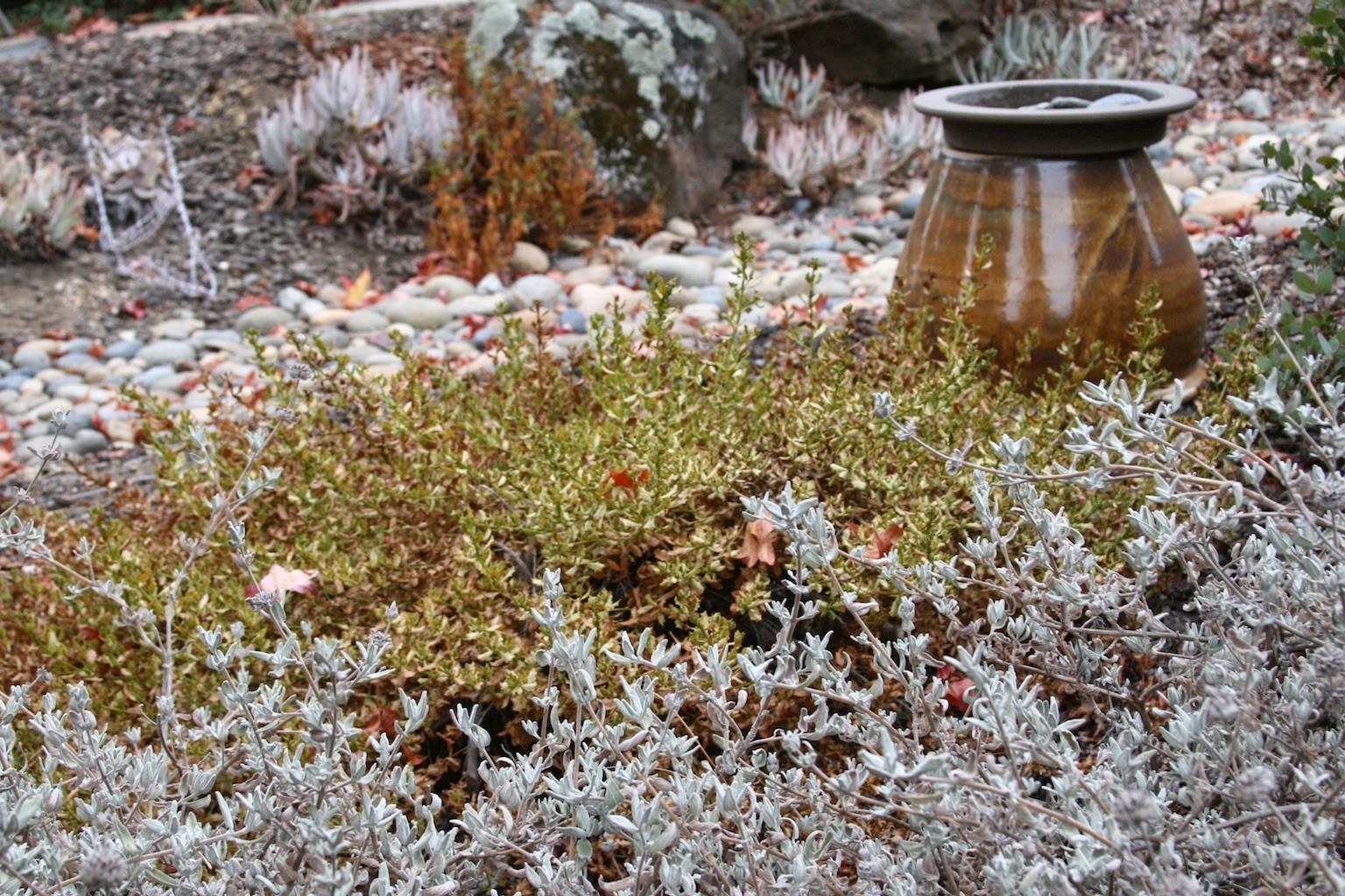 Dry Garden in Early Fall