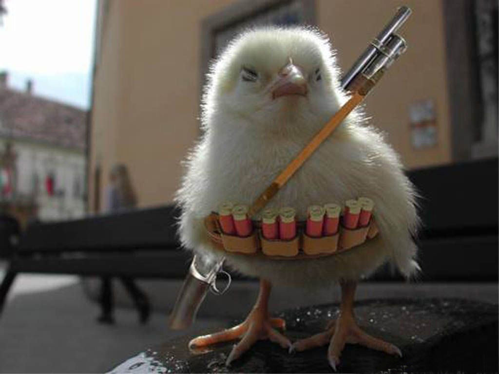 http://2.bp.blogspot.com/-Q4bYk4AK9KE/TiGzB1U4yTI/AAAAAAAABVc/yhTJHfBNarA/s1600/funny-wallpapers-chicken-war.jpg
