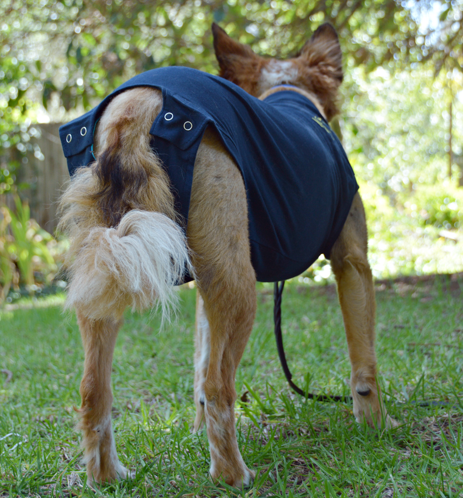 The dog geek product review medical pet shirt for Medical pet shirt dog