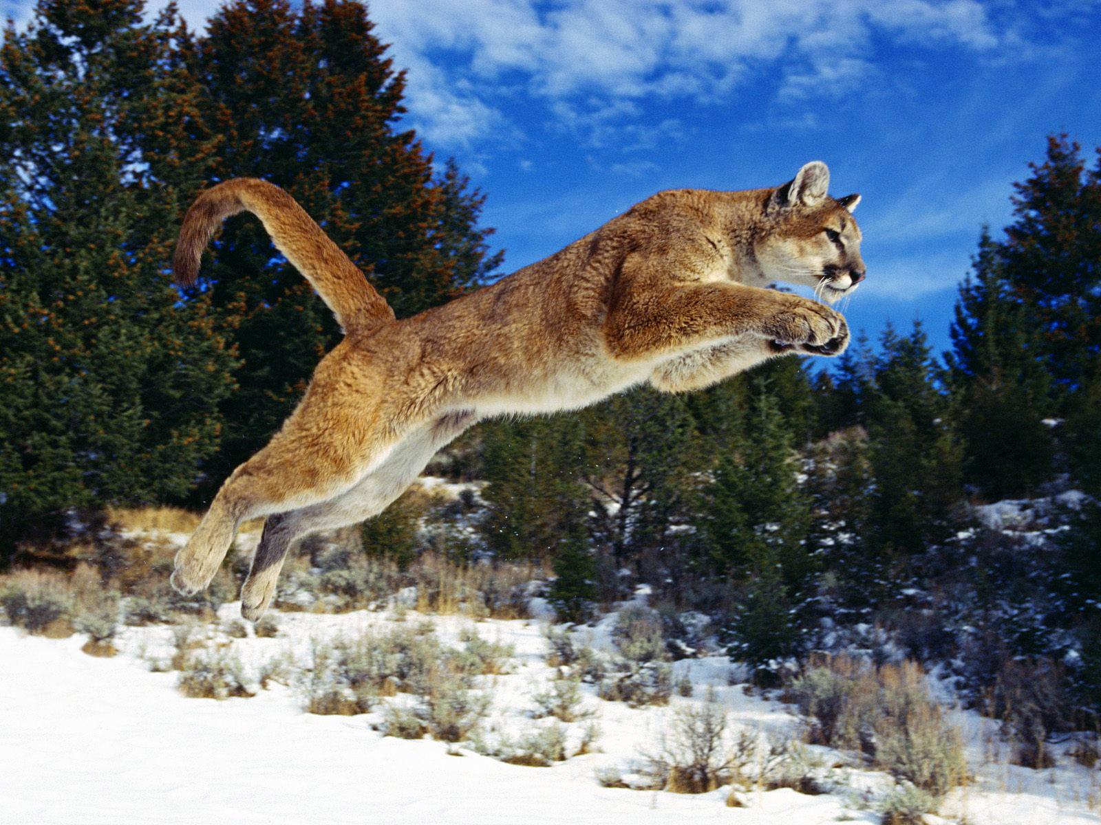 http://2.bp.blogspot.com/-Q5iAi8v_iO0/TnmLukgy1ZI/AAAAAAAAAG0/rcoGMIB6Z2s/s1600/Wildlife%2BAnimals%2BHunting%2BApple%2BPictures.jpg