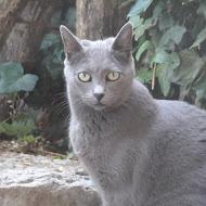 Un gatto è per sempre ;-)