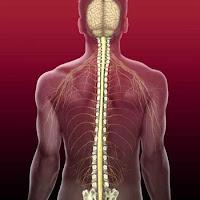 Bệnh Thoái Hóa Cột Sống và cách điều trị