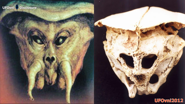 Le Rhodope Crâne : Crâne Etait-ce un vrai ALIEN ?