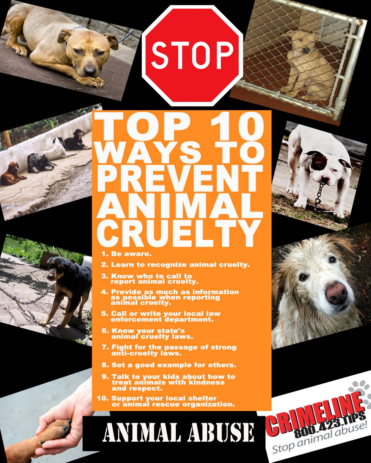 Animal abuse posters - photo#23