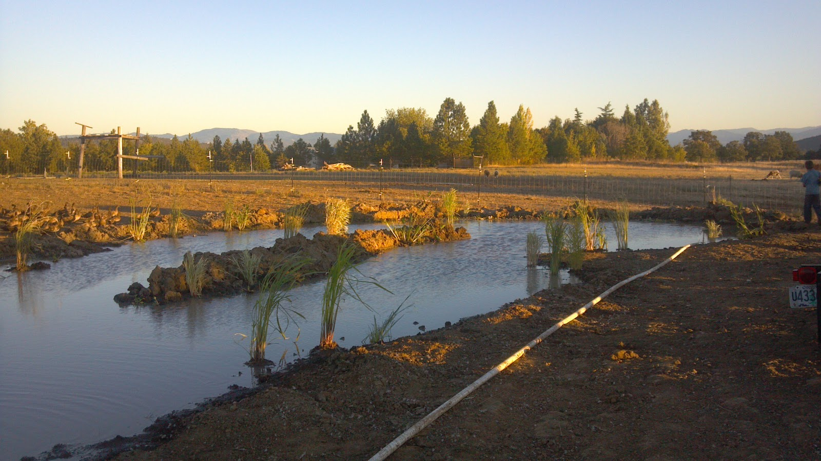 Life with little sprouts farm duck habitat improvements for Duck pond water