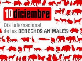 Día Internacional de los Derechos de los Animales