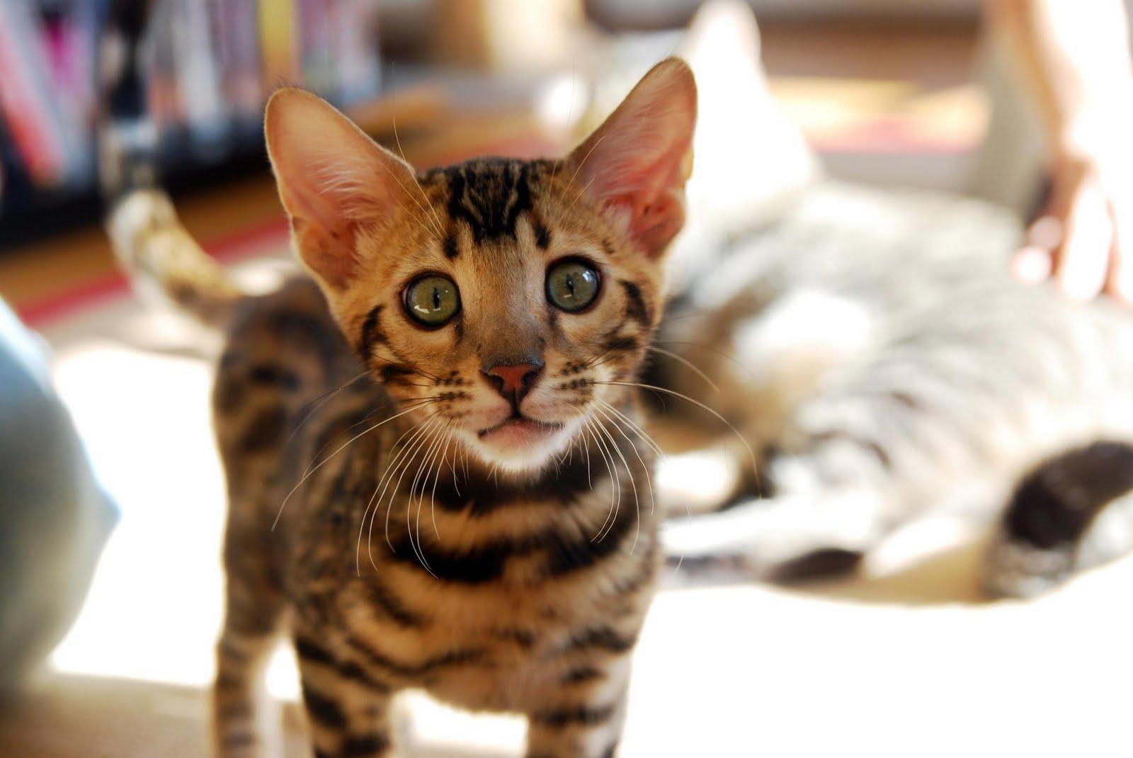 Фишка дня - гифки с котами и не только Fishka