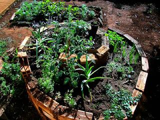 Spiral of herbs